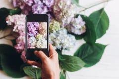 Telefone da terra arrendada da mão e foto da tomada de flores da hortênsia na madeira branca rústica, configuração lisa Índice pa fotografia de stock royalty free