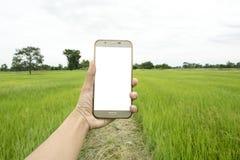 Telefone esperto à disposição com campo do arroz fotos de stock