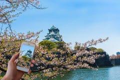 Telefone esperto móvel que toma a imagem de sakura com fundo do castelo de Osaka fotografia de stock royalty free