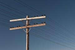 Telefone pólo Imagem de Stock