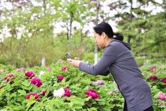 Telefoni cellulari di uso delle donne per prendere le immagini dei fiori Fotografia Stock