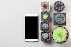 Telefoni il topview del cactus e del cellulare sul copyspace marrone della tavola Fotografia Stock Libera da Diritti
