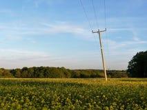 Telefonleitung Pfosten, die über Rapssamenfeld, Chenies, Buckinghamshire, Großbritannien laufen lizenzfreies stockbild