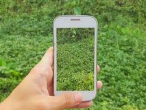 Telefono cellulare della tenuta della mano per prendere una foto Fotografia Stock