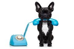 Telefono del telefono del cane fotografia stock libera da diritti