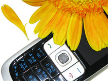 Telefono giallo delle cellule e del fiore (percorso clippining) Immagine Stock