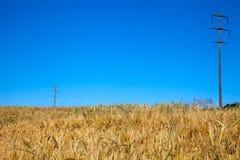 Telefono pali nel campo di grano Fotografia Stock