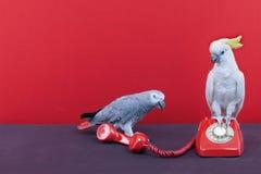 telefonsamtal Arkivbilder