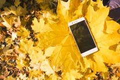 Telefoon in het gebladerte van de esdoornherfst Stock Fotografie