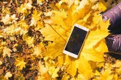 Telefoon in het gebladerte van de esdoornherfst Stock Foto's