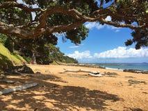 Telegrafíe la playa de la bahía, árbol del pohutukawa cerca de Mangonui, Nueva Zelanda imagenes de archivo
