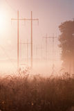 Telegraph pole, tree and grass in fog. A beautiful morning, Telegraph poles stand in pink fog Royalty Free Stock Images