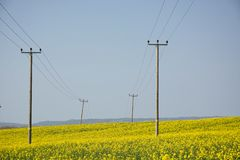 Free Telegraph Pole In Field Of Flowering Yellow Rape Seed Stock Images - 143737324