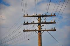 Telegraph pole. Stock Image