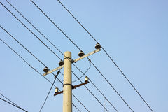 Telegraph poles Stock Image