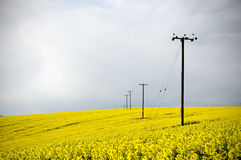Telegraph poles in farmland field Royalty Free Stock Images
