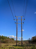 Telegraph Poles. Through a forest clearing Royalty Free Stock Photography