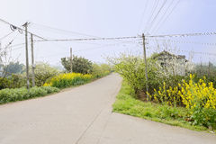 Telegraph poles at fork in flowering countryroad on sunny spring Stock Photos