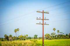 Telegraph poles Royalty Free Stock Image
