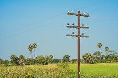 Telegraph poles Royalty Free Stock Photography