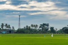 Telekommunikationtorn med risfältfältet Arkivfoto