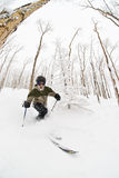 Telemark skiier. A Telemark skier in an aspen glade with fresh snow Stock Image