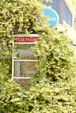 Telephone Booth in Bernadotte Il. This is Telephone booth still standing in Bernadotte as you can see it has flower bush growing on it Royalty Free Stock Images