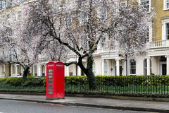 Telephone Booth. Famous, typical red british telephone booth under a tree blossoming in spring in a street with victorian houses in London, capital of the UK Stock Image