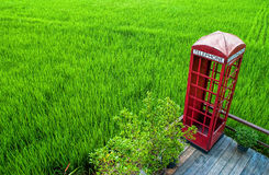 Telephone booth. In the rice field Royalty Free Stock Photography