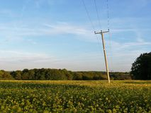 Telephone line poles running across rapeseed field, Chenies, Buckinghamshire, UK royalty free stock image