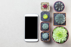 Telephone mobile and cactus topview on brown table copyspace. Telephone mobile and cactus topview on brown table copyspace Royalty Free Stock Photography