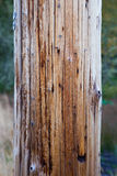 Telephone Pole And Grass Stock Photography