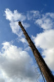 Telephone pole Royalty Free Stock Photography