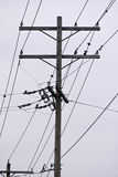 Telephone Poles and Lines Stock Photo