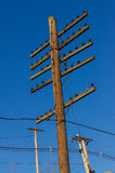 Telephone/Telegraph pole Royalty Free Stock Images