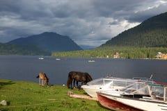 在海岸Teletskoe湖,阿尔泰状态自然Biospheric储备 库存照片