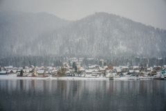 Teletskoye lake at winter Stock Images