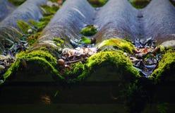 Telha de telhado possesed pela natureza Imagem de Stock Royalty Free