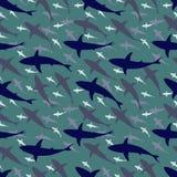 Telha do tubarão Foto de Stock Royalty Free