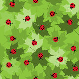 Telha sem emenda do Ladybug ilustração royalty free