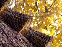 Telhado da palha no outono Imagem de Stock Royalty Free