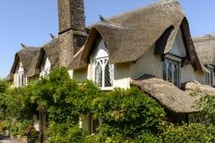 Telhado da videira e da palha em Porlock, Somerset Imagens de Stock Royalty Free