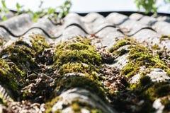 Telhado de ardósia velho com musgo nele Foto de Stock Royalty Free