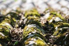 Telhado de ardósia velho com musgo nele Imagens de Stock