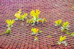 Telhado de telha da argila com extremidades arredondadas fotografia de stock royalty free