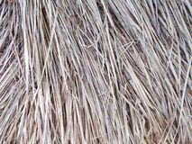 Telhado de Thached coberto com a palha de lingüeta seca cutted testes padrões, detalhe fotografia de stock