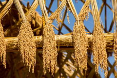 Telhado do arroz Imagens de Stock Royalty Free