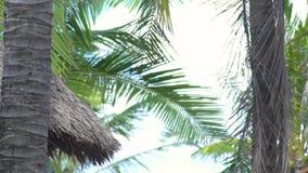 Telhado do bungalow do verão das folhas secas das palmeiras na praia do mar Bungalow do telhado cobrido com sapê e palmeira verde video estoque