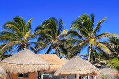Telhado do sol do palapa da cabana do céu azul da palmeira do coco Imagem de Stock