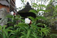 Telhado do templo do Balinese com as plantas em Bali Indonésia Imagens de Stock Royalty Free